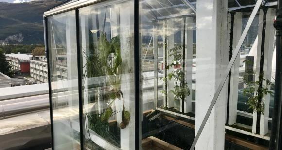 Sur le toit de Grenoble INP-Ense3, les étudiants ont conçu un projet innovant de serre connectée.