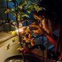 Laboratoire d'Ecologie systématique et évolution (ESE) à Orsay – UMR 8079 - Université Paris-Sud / CNRS / AgroParisTech © CNRS Photothèque - BERVEILLER