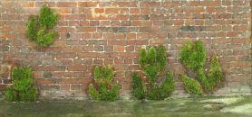 Graffiti végétal à l'université catholique de Lille. //©DR