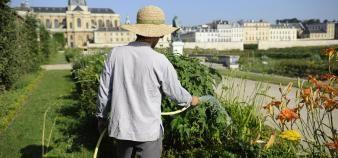 Le Potager du roi s'étend sur neuf hectares, à quelques rues de l'entrée du château de Versailles. //©Sylvain Duffard