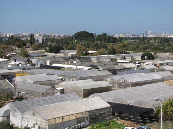 Les serres du centre Volcani à Beit Dagan en Israël.
