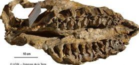 Un fossile de l'immense collection de l'université Lyon 1 // ©A. Prieur UCBL