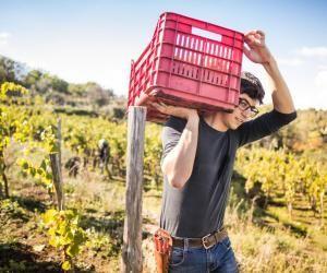"""Les travaux agricoles sont une source de nombreux jobs l'été en France comme à l'étranger. Pensez au """"wwoofing"""" qui permet d'apprendre et de travailler quelques heures par jour dans une ferme bio en échange du gîte et du couvert."""