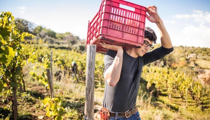 """Les travaux agricoles sont une source de nombreux jobs l'été en France comme à l'étranger. Pensez au """"wwoofing"""" qui permet d'apprendre et de travailler quelques heures par jour dans une ferme bio en échange du gîte et du couvert. //©PlainPicture"""