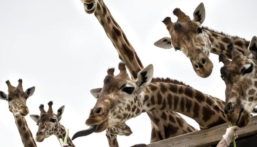 Kévin, 22 ans, est soigneur au Parc zoologique de Paris. //©Mat Jacob / Tendance Floue pour l'Étudiant