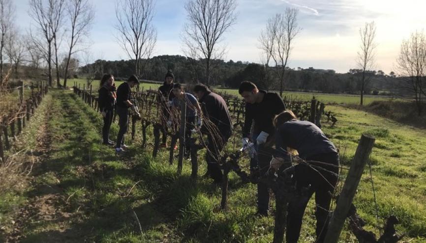 Avant de conseiller des clients sur le choix d'un vin, le sommelier doit apprendre les bases du métier et s'imprégner de la culture de la vigne. //©Photo fournie par les témoins