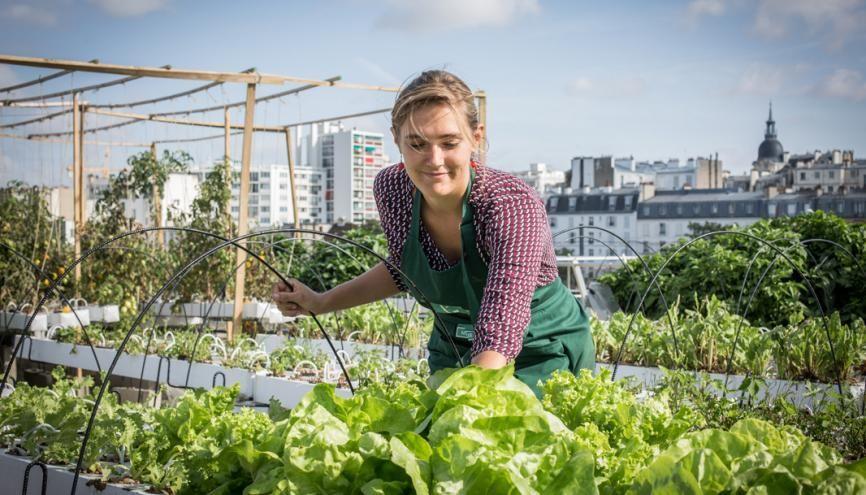 Aéromate, jeune pousse de l'agriculture urbaine, ambitionne de verdir les toits de Paris. //©Julia Balagué pour l'Etudiant