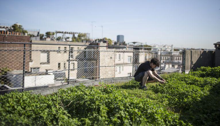 Le rooftop le plus original de la capitale ! La grande terrasse de l'établissement parisien d'Agro ParisTech abrite un potager urbain expérimental qui sert aux cours des élèves ingénieurs.