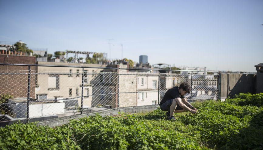 Le rooftop le plus original de la capitale ! La grande terrasse de l'établissement parisien d'Agro ParisTech abrite un potager urbain expérimental qui sert aux cours des élèves ingénieurs. //©Laurent Hazgui/Divergence pour l'Etudiant