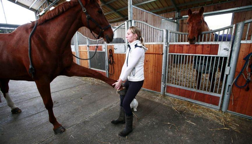 Ostéopathe animalier : un métier qui n'est pas dangereux si on est à l'écoute des animaux. //©Adeline Keil pour l'Etudiant