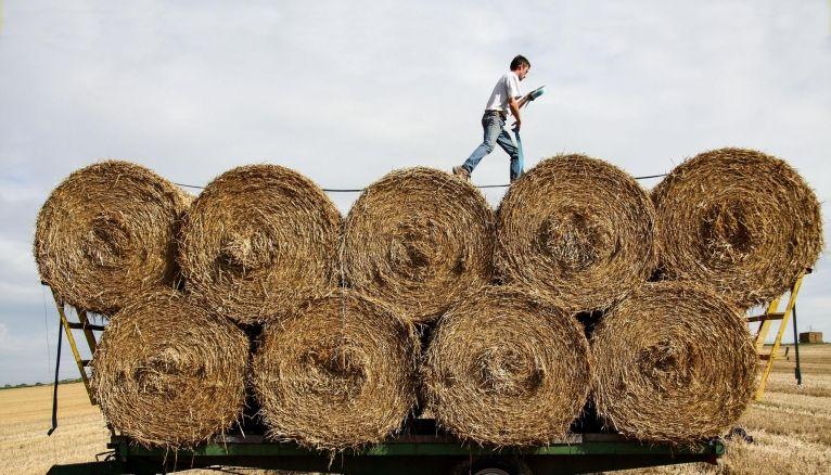 Les ouvriers agricoles et les chefs d'exploitation dans la production animale sont particulièrement recherchés dans certaines régions.