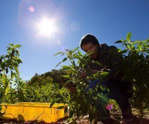 Développement durable : et si vous créiez un potager en plein coeur de votre campus, dans votre école ou votre université ?