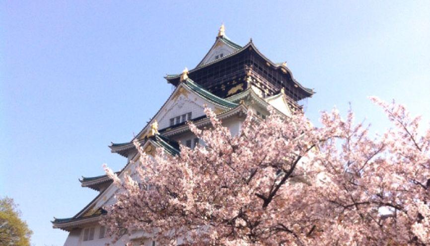 Le château d'Osaka avec les cerisiers en fleurs. //©M.