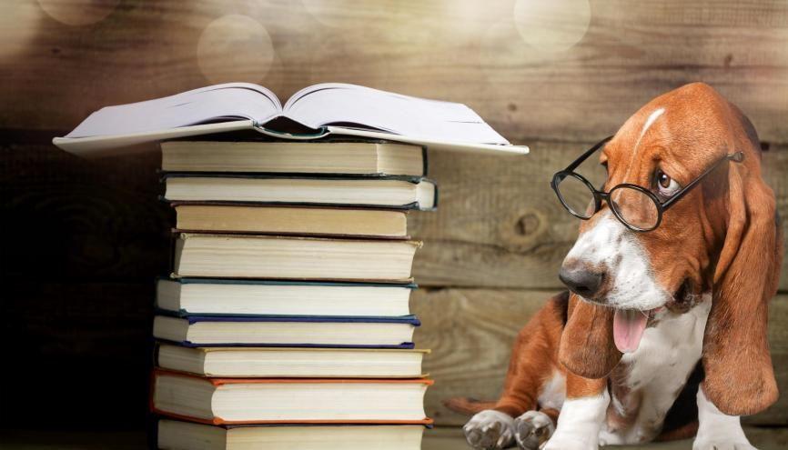 Ce cursus universitaire apporte une expertise très particulière dans le secteur du droit. //©Adobe Stock / BillionPhotos.com
