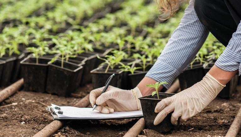 Les bacheliers en Sciences et Technologies de l'Agronomie et du Vivant poursuivent leurs études dans les domaines de l'agriculture, agroalimentaire, industrie, environnement…