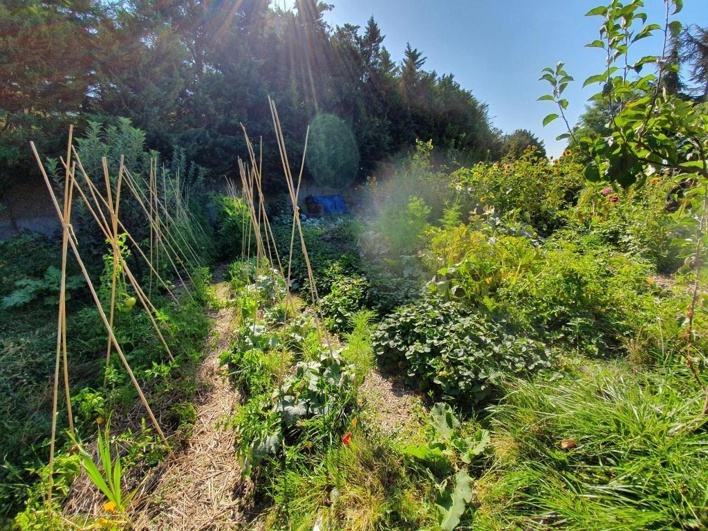 Pour ses potagers, le collège Pierre Mendès France, à Paris (XXe), pratique la permaculture. //©Thibaut Cojean