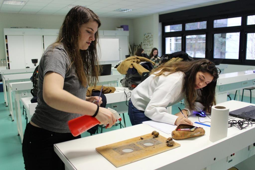 Manon et Émilie ont choisi d'étudier la vitesse des escargots pour leur TIPE (travail d'initiative personnelle encadré). //©Delphine Dauvergne