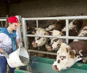 40% des salariés des exploitations agricoles sont des salariées.