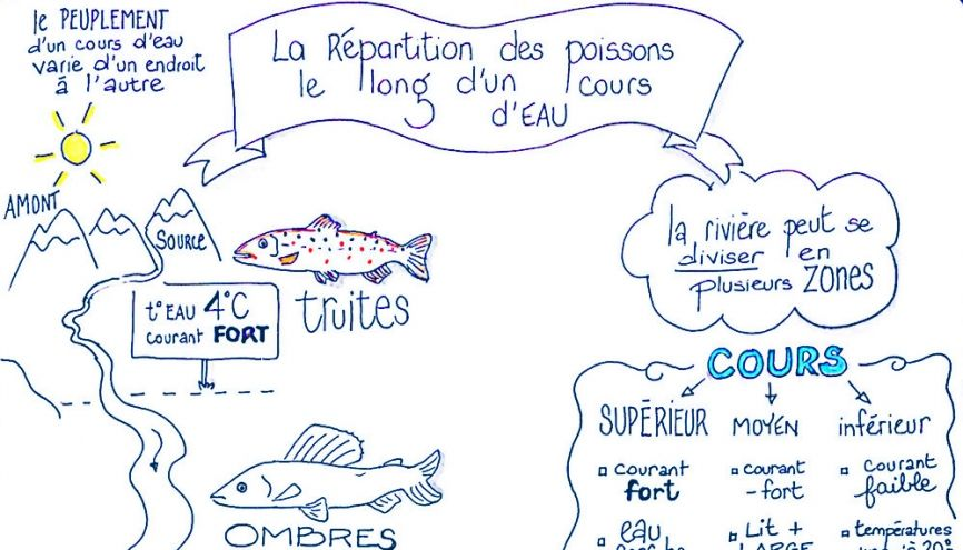 Un exemple de leçon de SVT au collège sous forme de sketchnote. //©Isabelle Pailleau