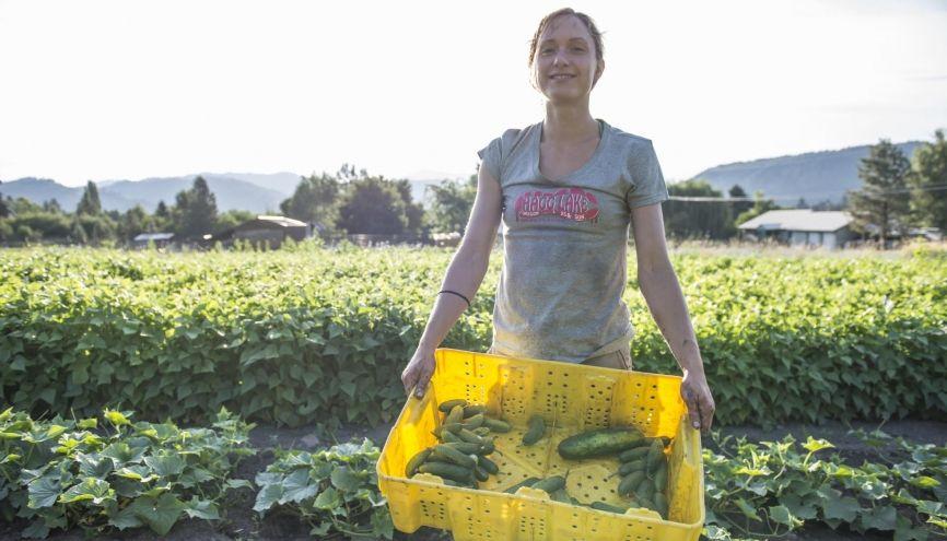 De nombreux postes sont à pourvoir dans l'agriculture durant la saisons estivale. //©plainpicture/Aurora Photos/Alasdair Turner