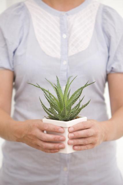 L'aloe vera, la plante aux mille vertus. //©plainpicture-matton-nicklas-blom