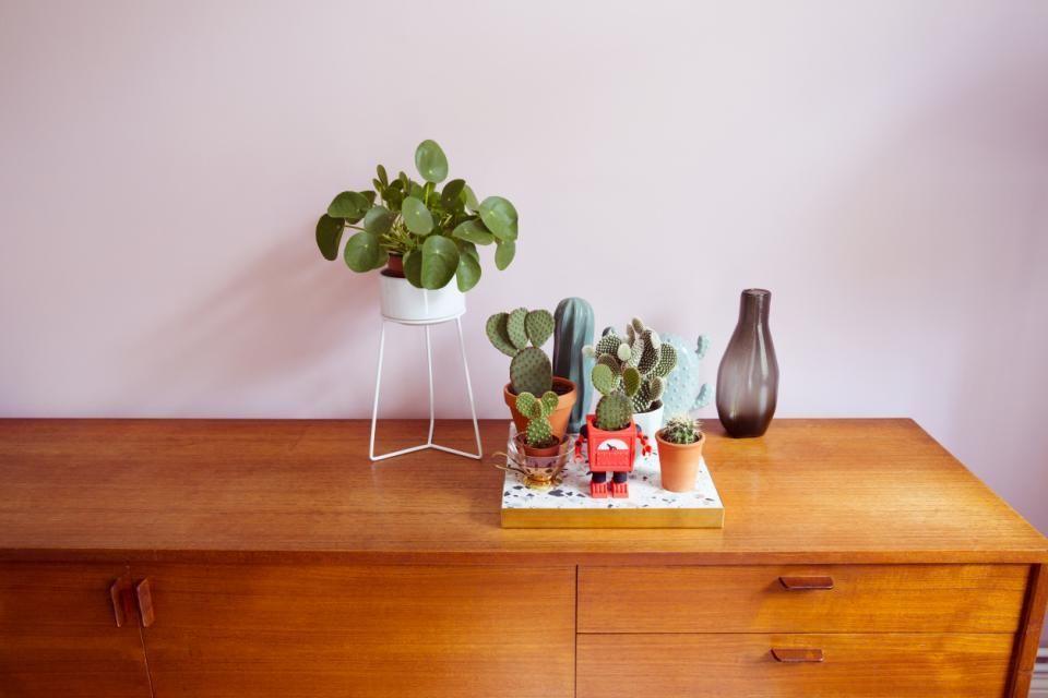 À poils, ventripotent ou piquant, le cactus a plus d'un tour dans son sac pour égayer une pièce. //©plainpicture/MiaTakahara