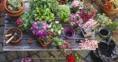 Mettez des plantes dans votre appart'
