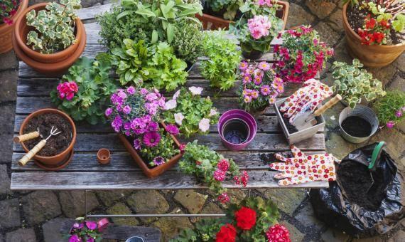 d co vous touffez dans votre appart adoptez des plantes l 39 etudiant trendy. Black Bedroom Furniture Sets. Home Design Ideas