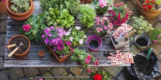 Vous allez respirer dans votre petit appart' grâce à ces plantes ! //©PlainPicture