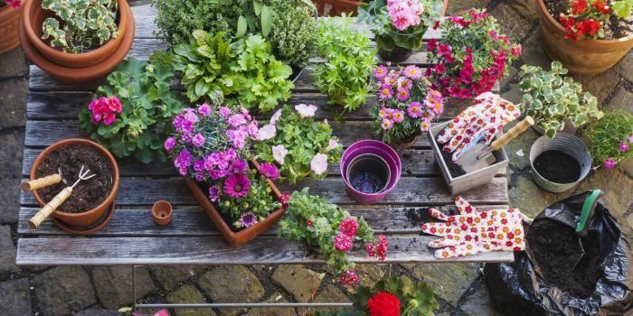 Vous allez respirer dans votre petit appart' grâce à ces plantes !