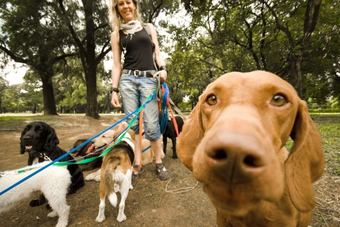 job etudiant garde animaux