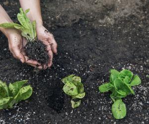 Agriculture: goûtez auxformations quicultivent lebio!