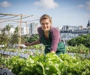 Ces diplômés d'écoles d'ingénieurs créent des potagers sur les toits de Paris