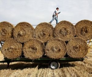 Agriculture : quels métiers recrutent en alternance?