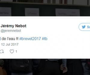 """Les résultats du brevet 2017 vus de Twitter : """"Grâce à Léo, j'ai eu mention bien"""""""