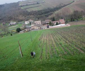Au cœur du lycée Lucie-Aubrac : la vigne et le vin