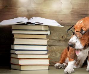 Comment obtenir un diplôme universitaire en droit animalier ?