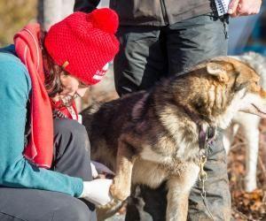 Étudiantes vétérinaires, elles ont vécu une expérience inégalable au cœur de la Grande Odyssée Savoie-Mont-Blanc