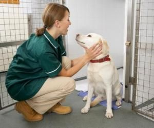 Zoom : les écoles vétérinaires en Belgique