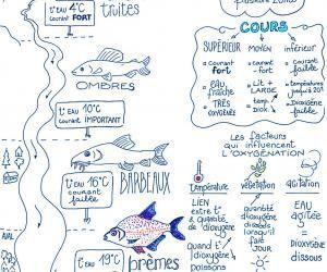 Le sketchnoting, une méthode visuelle pour apprendre voscours