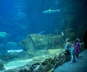 Métiers de l'océanographie : plongée dans l'Aquarium deParis